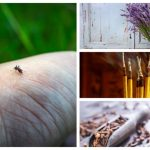 Natural Ways To Get Rid Of Mosquitos