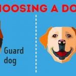 Amazing Facts About Choosing the Right Pet for Yourself